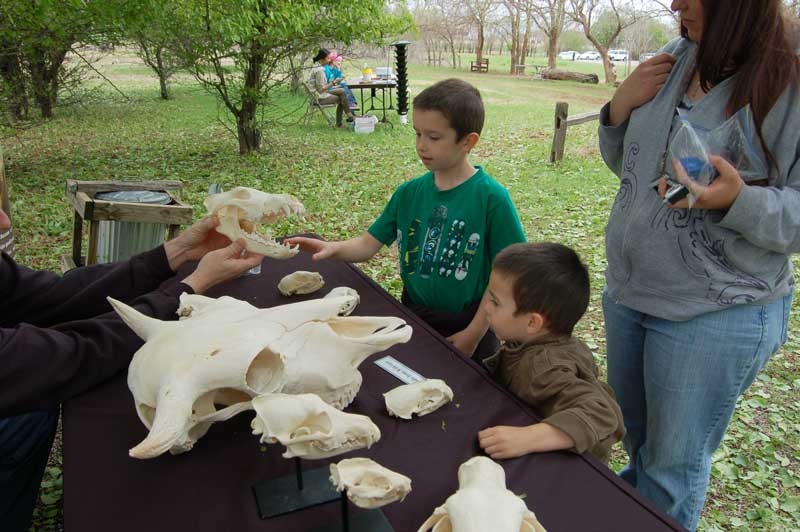 Martin Park Nature Center Skulls Education