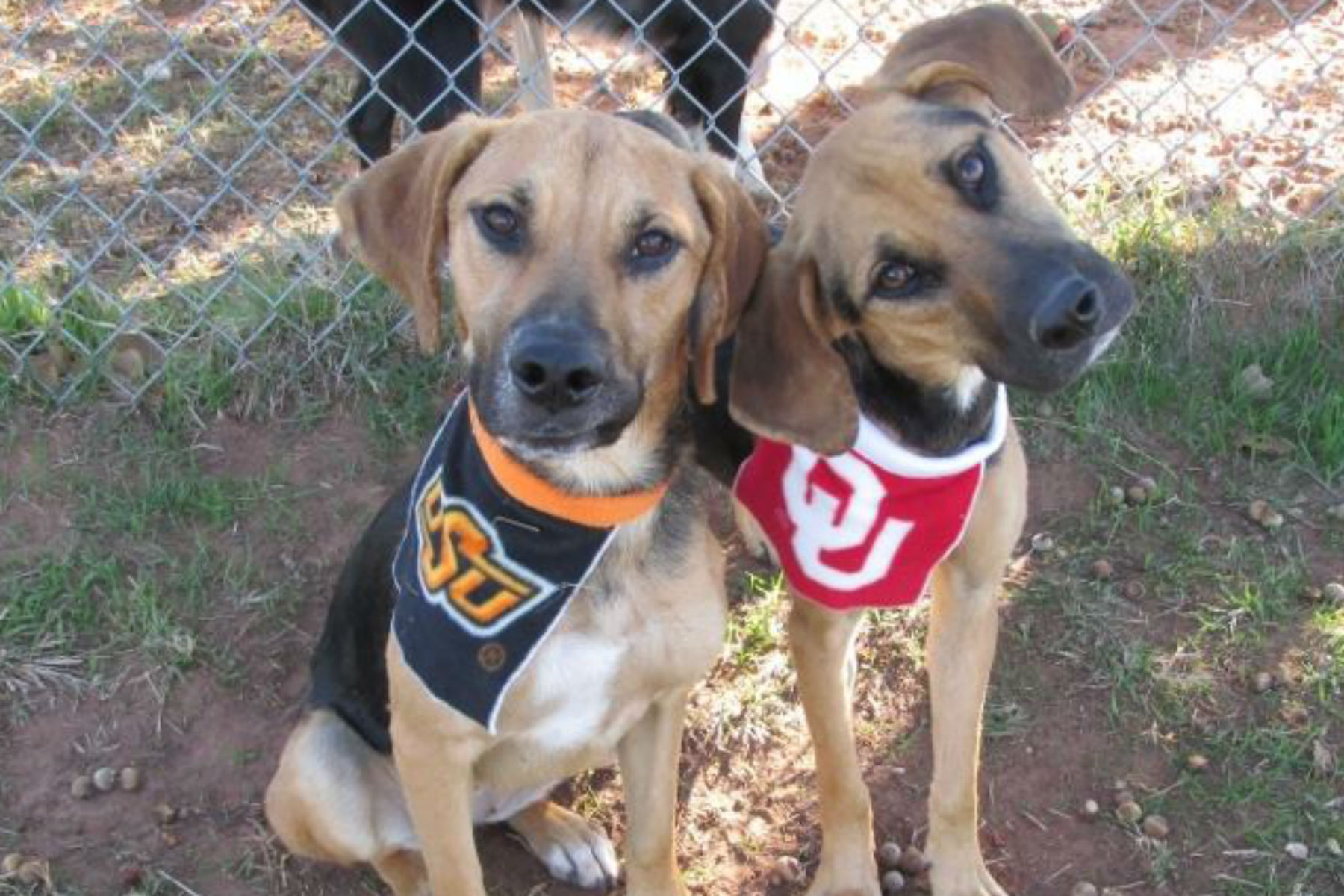 Two dogs at OKC Animal Welfare