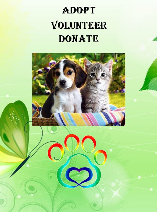 adopt volunteer donate puppy and kitten